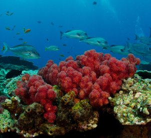 Subtidal Reefs